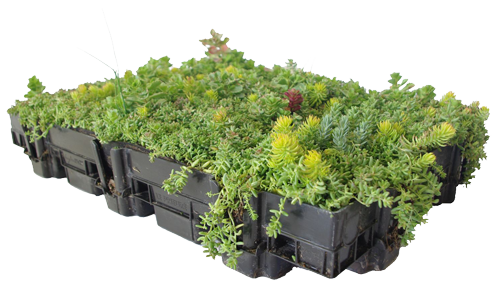 Green Roof Tray